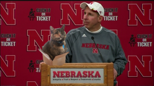 Bo Pelini with cat in box