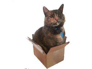 Cat in small box