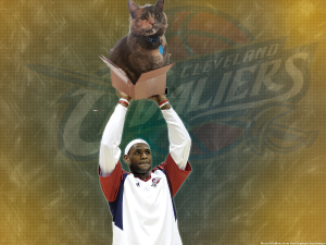 Lebron with Cat in box