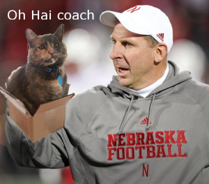 Bo Pelini cat in box